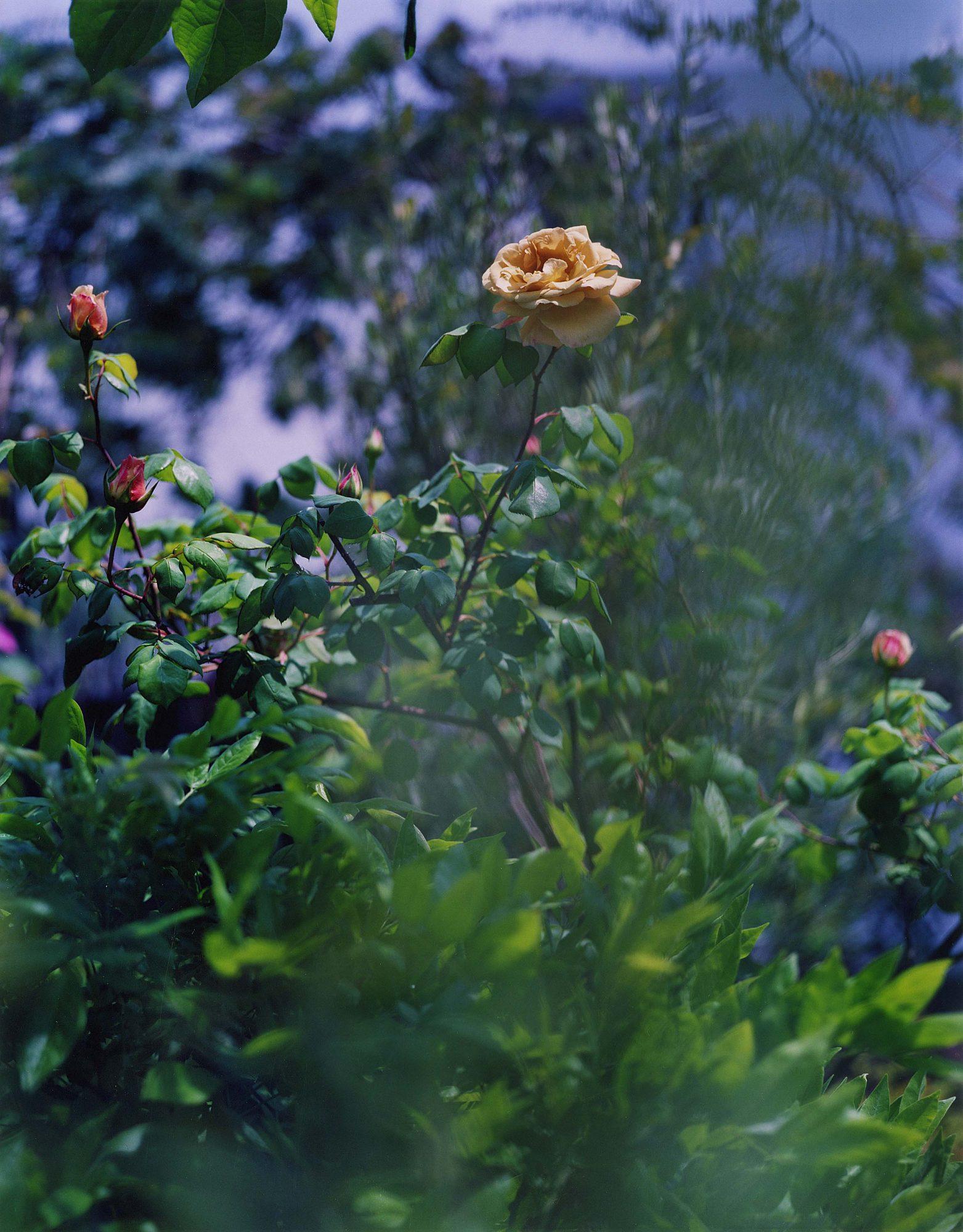 Garden&Greenhouse