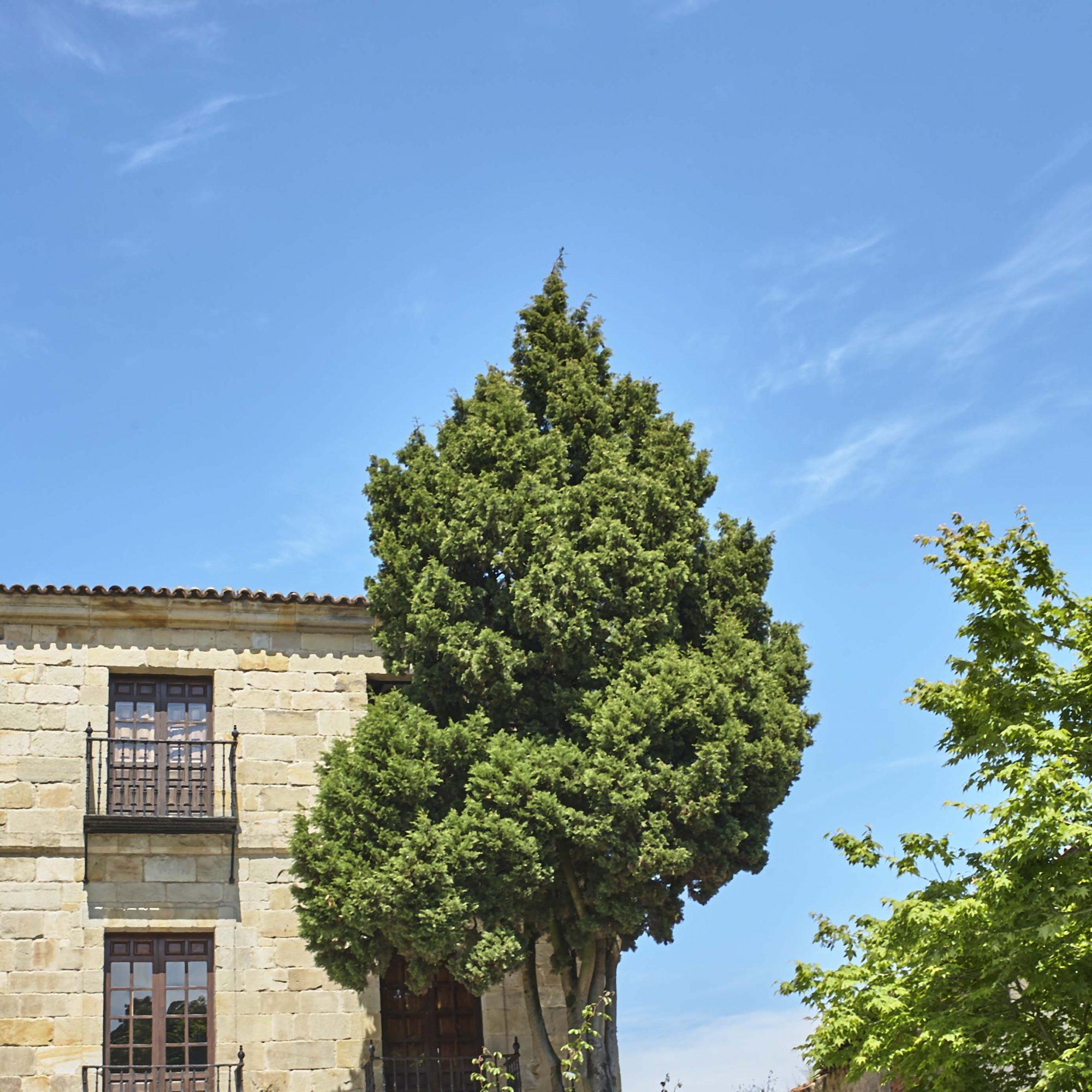 Basque to Santiago de Compostela